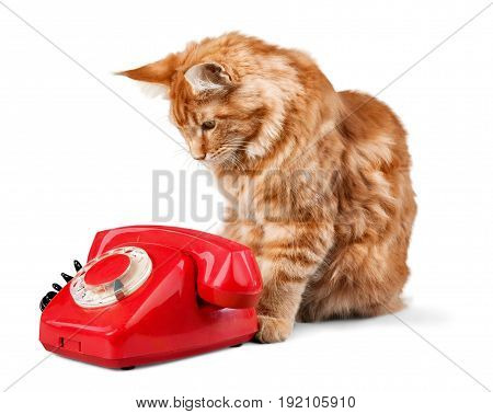 Red cat retro phone color white background small