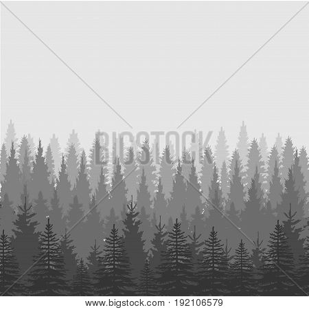 Healthy green trees in a forest of old spruce fir and pine trees in wilderness of a national park