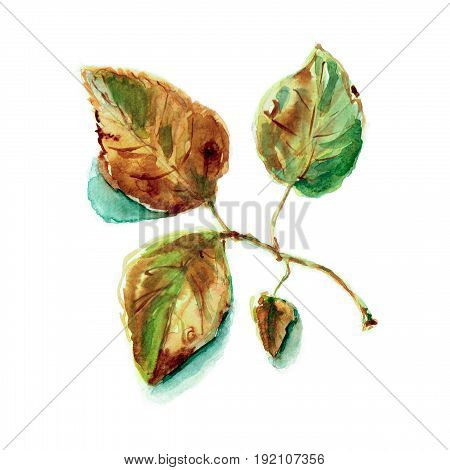 Aspen branch with autumn leaves in brown and green colors. Seasonal garden illustration. Watercolor, paper. Botanical painting