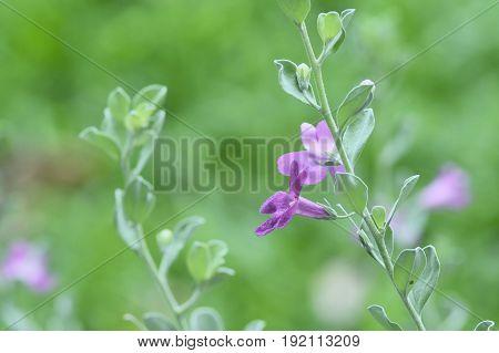 Purple Flower As Background