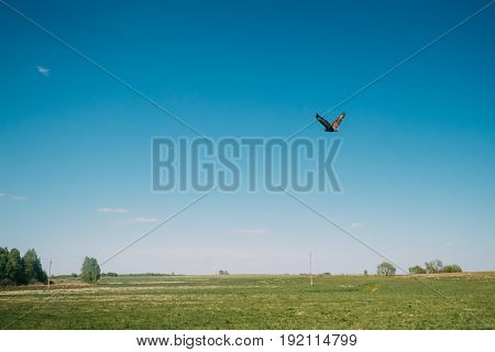 Common Buzzard Or Buteo Buteo Wild Bird Flies Over The Field In Belarus. Wild Bird Flies Over Rural Landscape. Medium-to-large Bird Of Prey Whose Range Covers Most Of Europe And Extends Into Asia.