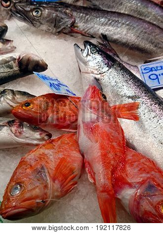 Salmon and redfish on ice at the market