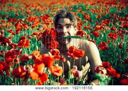 Bouquet In Teeth Of Man In Field Of Red Poppy