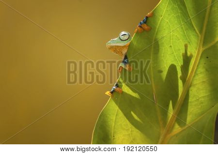Frog stay back leaf with backlight sun poster