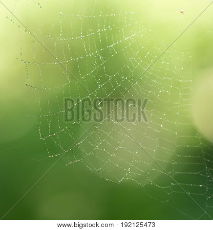 water droplets on a spider web in nature .