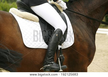 Brand new show jumper leather saddle on horseback against green natural background. Unknown rider canter on show jumping training