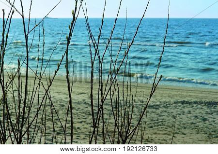 Baltic sea coast through the branches of the bushes