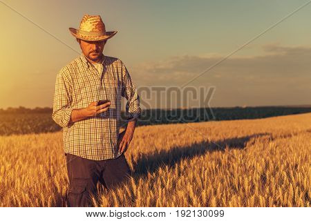 Retro toned image of agronomist farmer using mobile phone in ripe wheat crops field