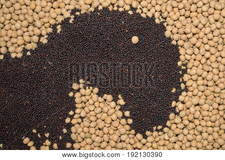 Oilseed rape and soybean seed as texture top view