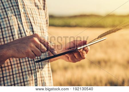 Smart farming using modern technologies in agriculture. Male agronomist farmer with digital tablet computer in wheat field using apps and internet in agricultural production and crop protection selective focus