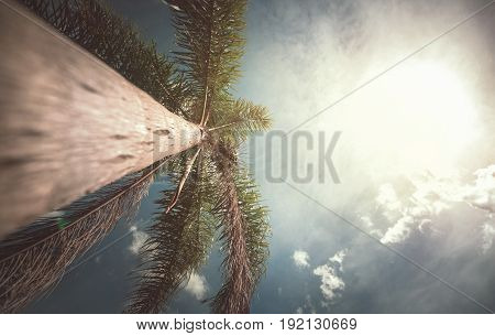 Coconut tree seen from below on sunny day.