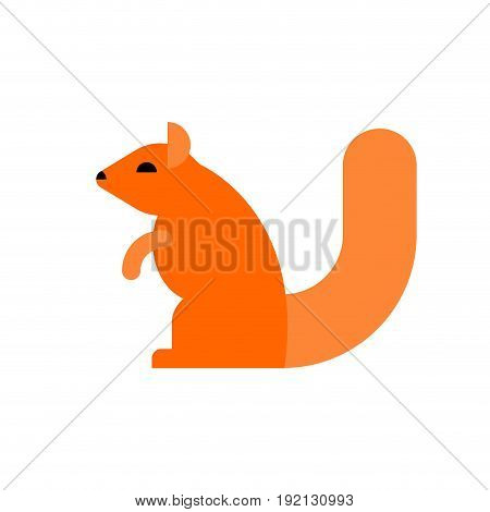 squirrel isolated. Rodent on white background. vector illustrator