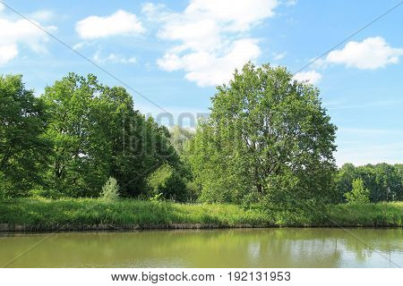 green tree growing on the bank of a pond in summer, Poodri, Czech Republic