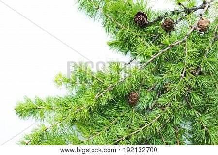 Frame background with christmas tree branches and cones. Top view. The design element to design web banners postcards. Christmas winter pattern.
