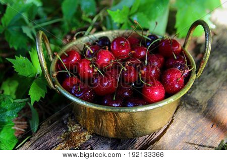 cherries in a metal bowl on the table in the garden