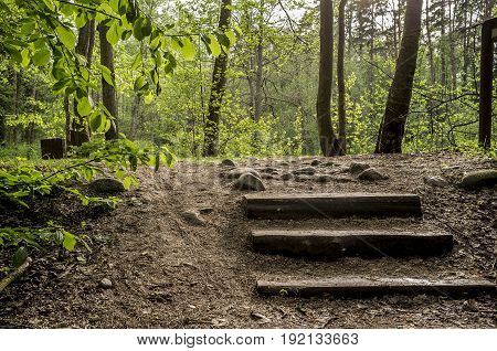 Old wooden steps lead the path in the summer forest on a warm sunny day.