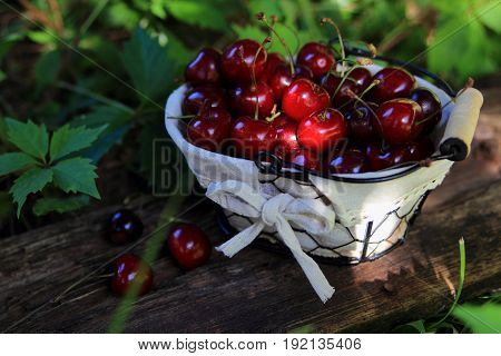 ripe cherries in wicker basket in the garden