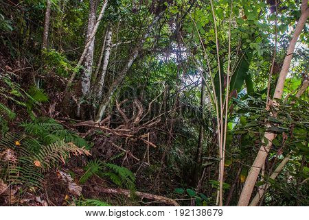 Landscape With Green Trees In The Jungle, Negros. Philippines