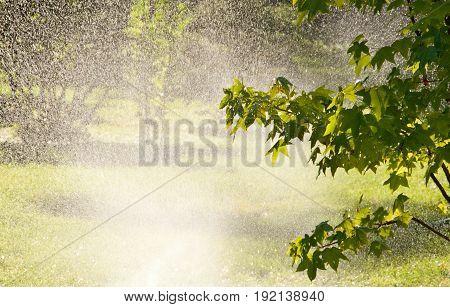 Sprinkler Of Automatic Watering In Garden