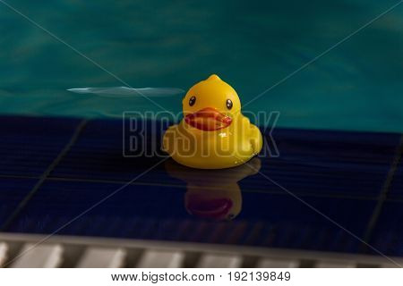 Yellow rubber ducky floating in a swimming pool