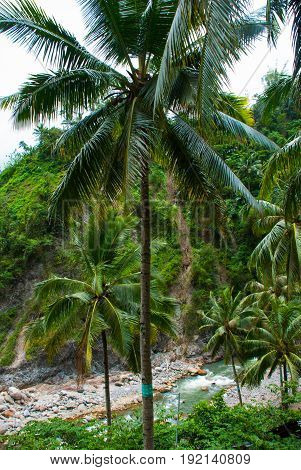 Top View Of Palm Trees And The River. Beautiful Landscape, Negros. Philippines