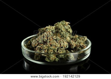 Heap of weed buds in Petri dish on black background