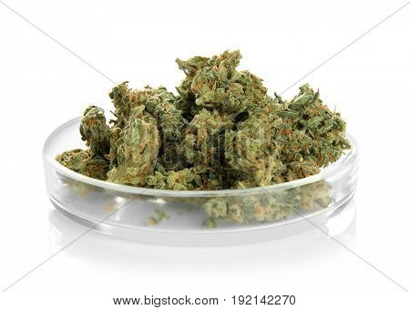 Heap of weed buds in Petri dish isolated on white