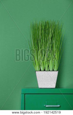 Beautiful houseplant on green background