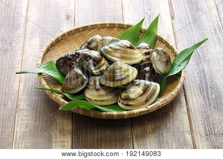 hamaguri, honhama, japanese clam, common orient clam,meretrix lusoria