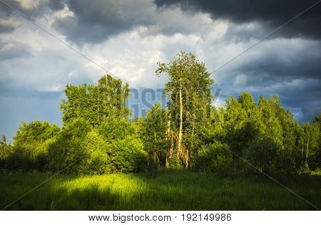 Forest landscape in bad weather and storm clouds