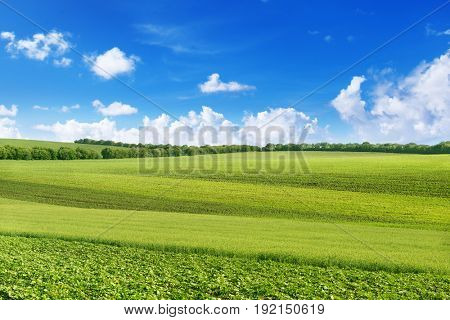 A picturesque spring field from different agricultural crops