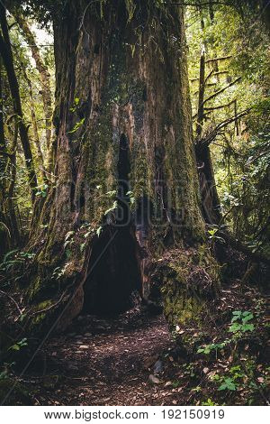 Forest trail leading to an old tree trunk.