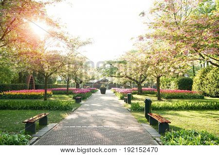 Beautiful alley with green lawn and blooming flowers