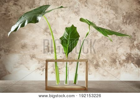Composition with green tropical leaves on table against color background