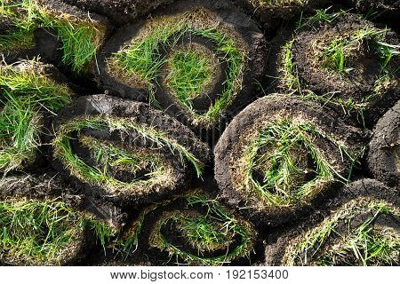 Rolled grass sods as background