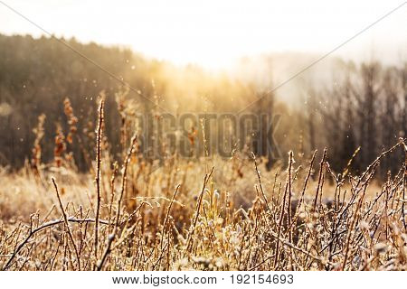 Frozen late autumn meadow close up. Winter background.