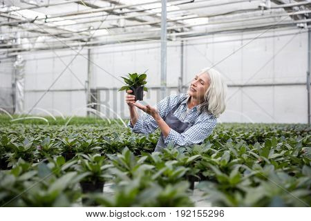 Picture of amazing mature woman standing in greenhouse near plants. Looking aside.