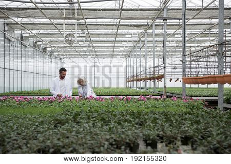Picture of young bearded man standing in greenhouse with mature woman near plants. Looking aside.