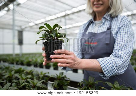 Cropped picture of mature woman standing in greenhouse near plants