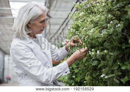 Picture of mature woman standing in greenhouse near plants. Looking aside.
