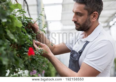Picture of concentrated young bearded man standing in greenhouse near plants. Looking aside.