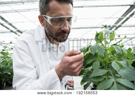Picture of young concentrated man standing in greenhouse near plants wearing glasses. Looking aside.