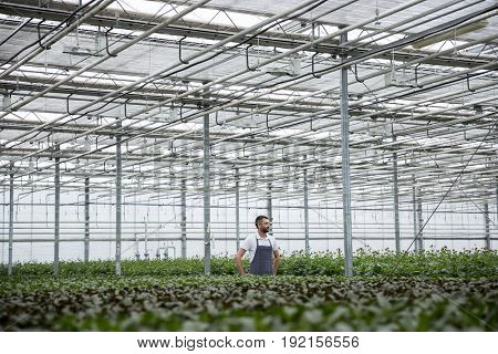 Picture of concentrated young man standing in greenhouse near plants. Looking aside.