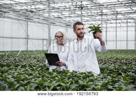 Image of serious young man and mature woman standing in greenhouse near plants holding clipboard. Looking aside.