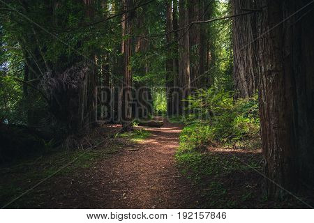 Image of a lush and green forest trail.