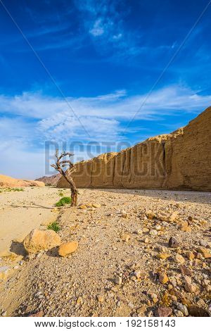 Stone desert near the seaside resort of Eilat. The route starts in the scenic Black Canyon. Bizarrely dried curved wood