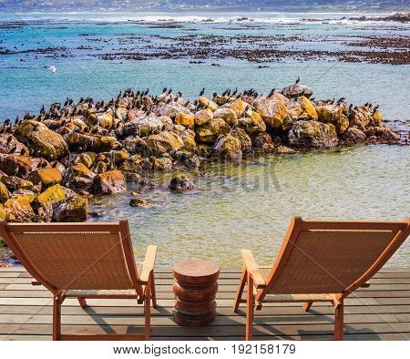 Two armchairs chaise longue by Atlantic ocean. African penguins among coastal stones. Boulders Penguin Colony in the Table Mountain National Park, South Africa. The concept of ecotourism