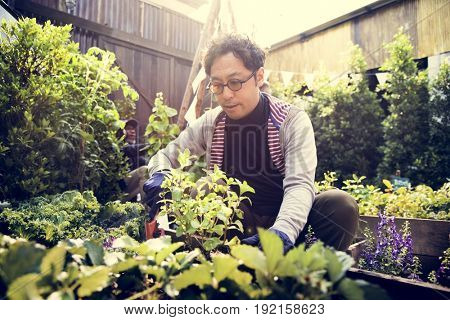 Asian man gardening transplanting outdoors