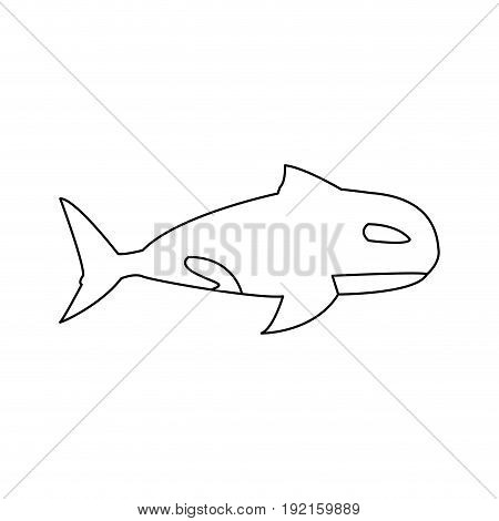 orca whale wildlife marine aquatic vector illustration