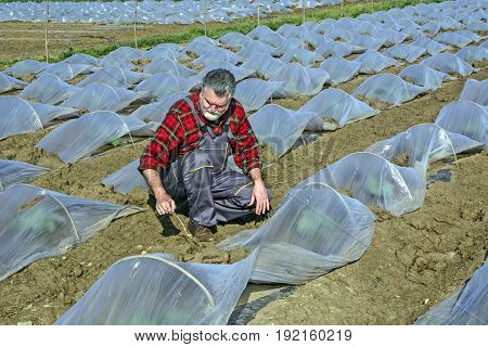 Farmer In The Plantation Of Watermelon And Melon